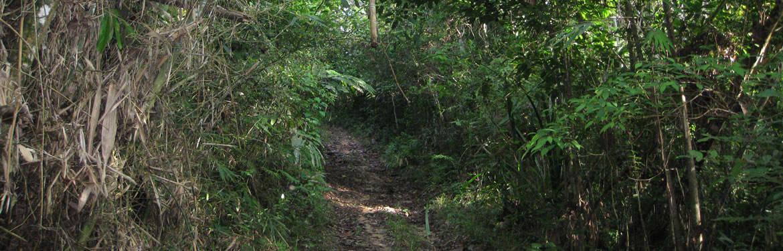 Small jungle trail - Mountain Ridge Trek